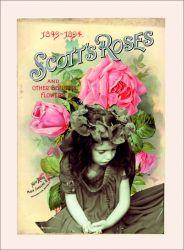 Karkulka s šípkovou růží - bavlna