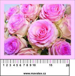 Panelový tisk - fotka růží