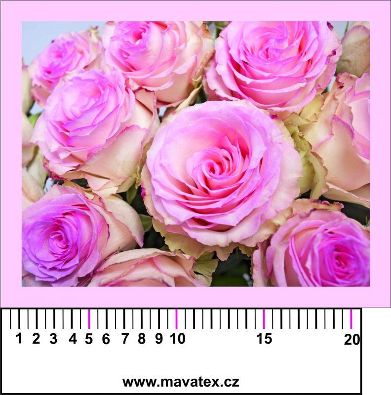 Panelový tisk - fotka růží - obrázky na látce, designový tisk, tisk na přání Tukan