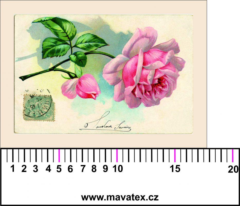 Panelový tisk - pohlednice s růží - obrázky na látce, designový tisk, tisk na přání Tukan