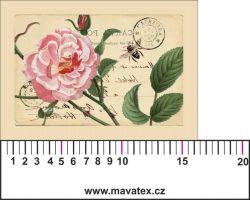 Panelový tisk -vintage pohlednice velká růžová růže-satén