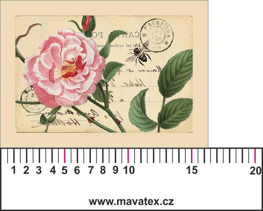 Panelový tisk -vintage pohlednice velká růžová růže-kepr - obrázky na látce, designový tisk, tisk na přání Tukan