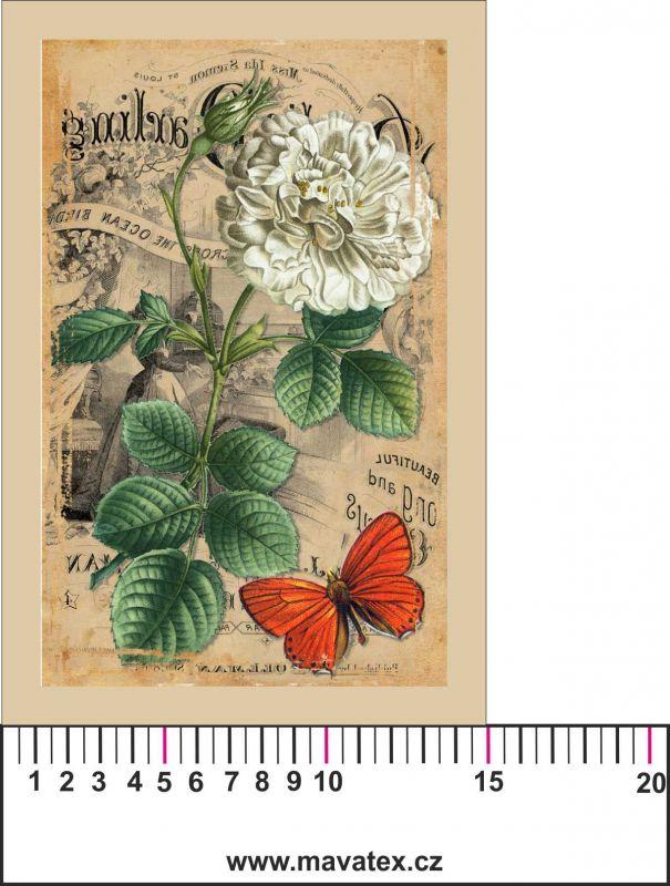 Panelový tisk -vintage pohlednice velká bílá růže a motýl-kepr- obrázky na látce, designový tisk, tisk na přání Tukan