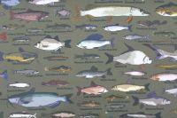 Kepr army ryby-digitální tisk