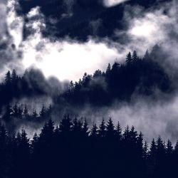 Softshell černobílý les- BERÁNEK
