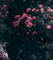 Silky- drobné kvítky na tmavé -2 jakost