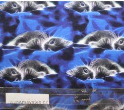 Jednolícní úplet koťátka na modrém sametu -220 gsm EU-úplety atest pro děti