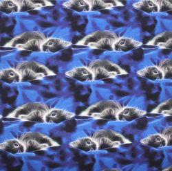 Jednolícní úplet koťátka na modrém sametu -220 gsm