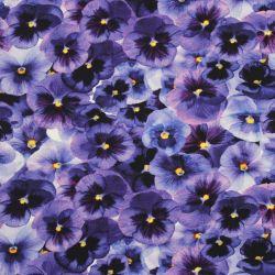 Jednolícní úplet fialové macešky -180 gsm