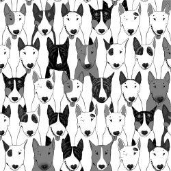 Psi v řadě černo-bílá-sublimační digitální tisk | Funkční úplet TORINO 140 gsm, GARZATO 200gsm- funkční úplet počesaný, Kočárkovina , LYCRA 200, Micropeach, Softshell jarní 285 gsm, Softshell letní pružný 220gsm, Softshell zimní 320 gsm